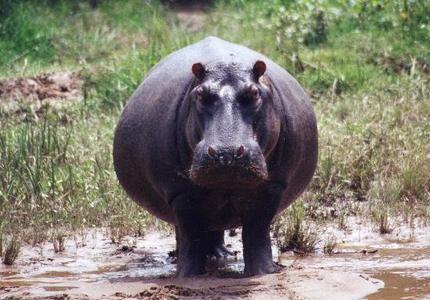 Hippo Proof Flap Valves for Rwanda
